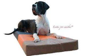 Medizinisch orthopädische Hundebetten